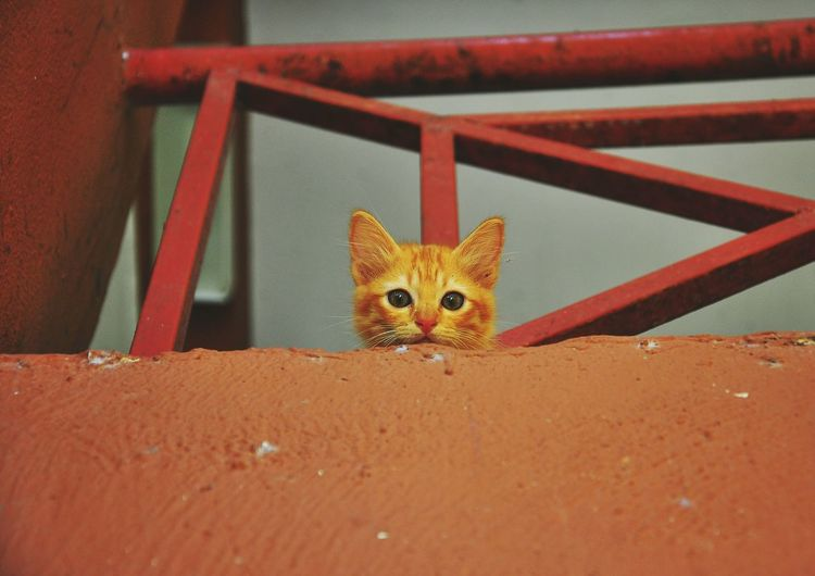Low angle portrait of cat on wall