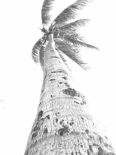 Palm Tree Look Up Sky Himmel Baum Beach Black And White Schwarz & Weiß Holes In Wood Outdoors Tree No People White Wind Samsung Galaxy Tab 2 EyeEm Selects