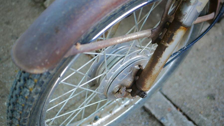 High angle view of lizard on bicycle
