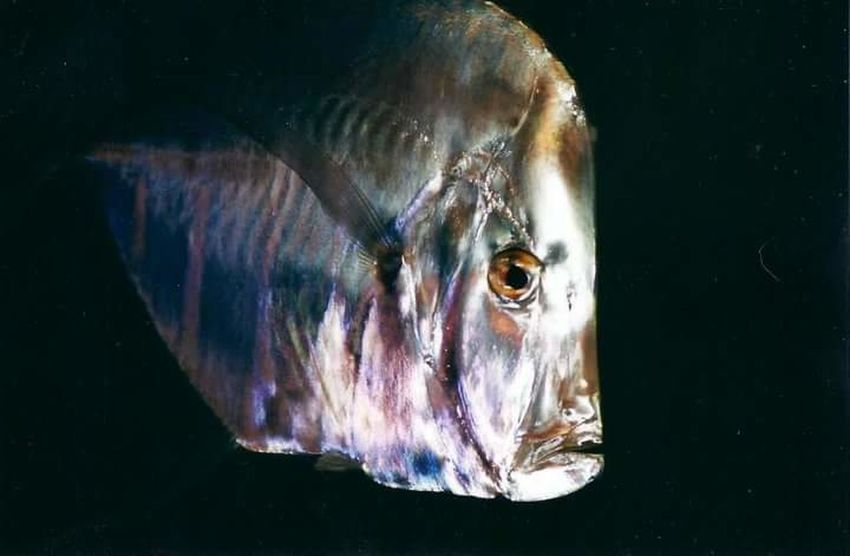 Out Of The Deep Deep Space Foil Fish