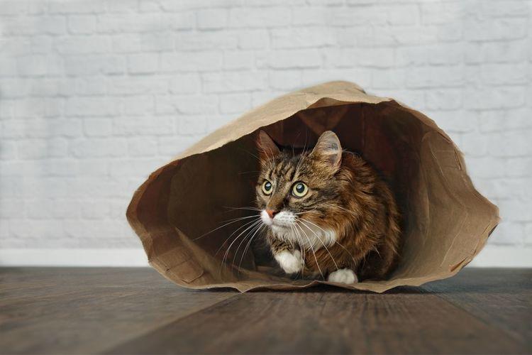 Cat Sitting In Paper Bag On Floor