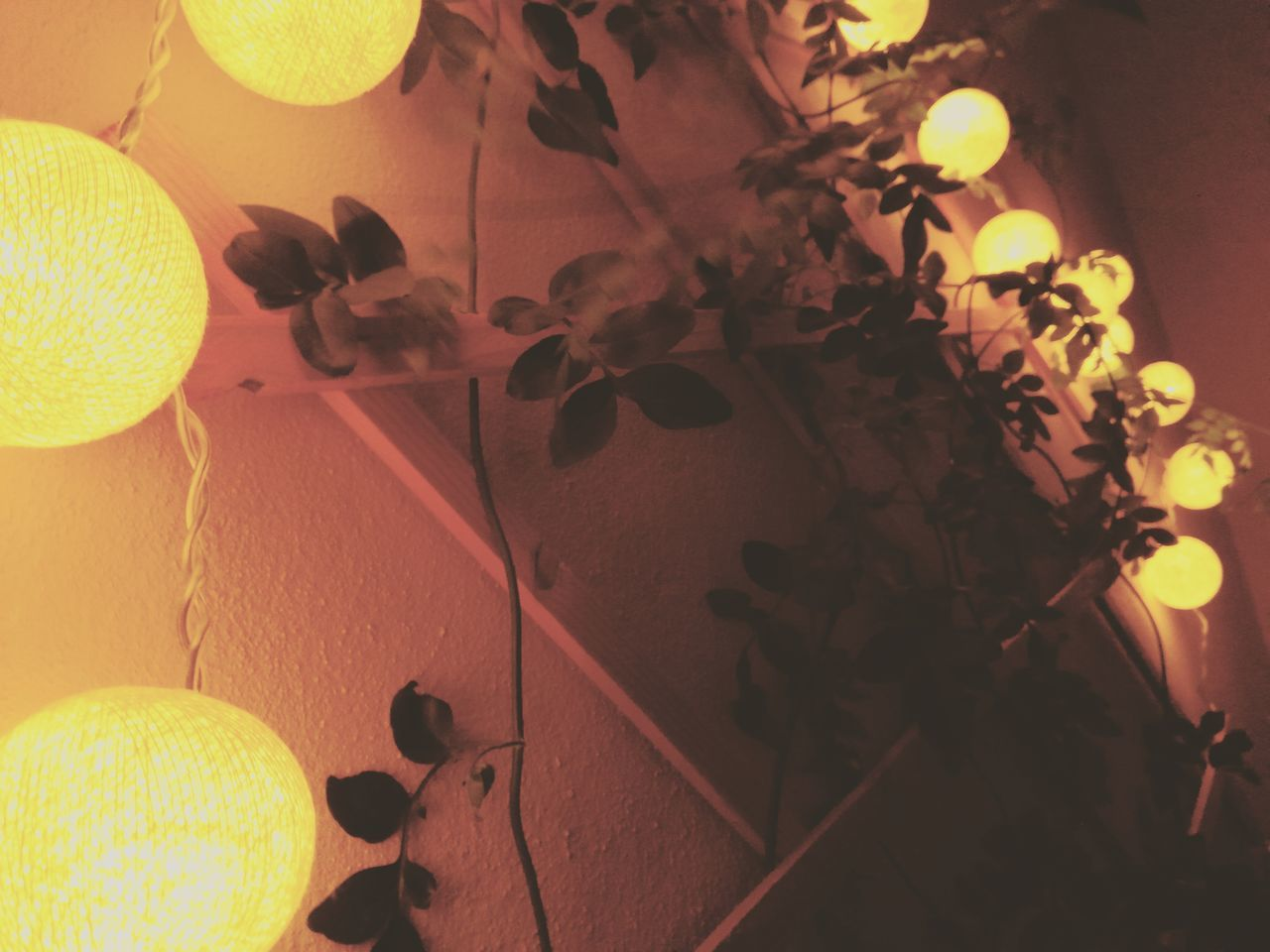leaf, indoors, fruit, no people, close-up, nature, freshness, night, fragility, beauty in nature