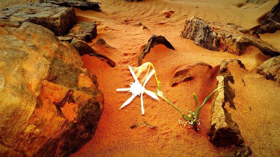 The star of desert :white flower Enjoying Life Relaxing