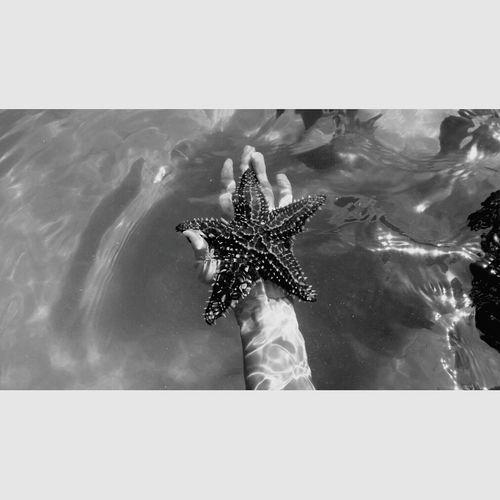 Blackandwhite Photography Starfish  Roatan, Honduras Westbaybeach Honduras ♥ MyWorldInPictures
