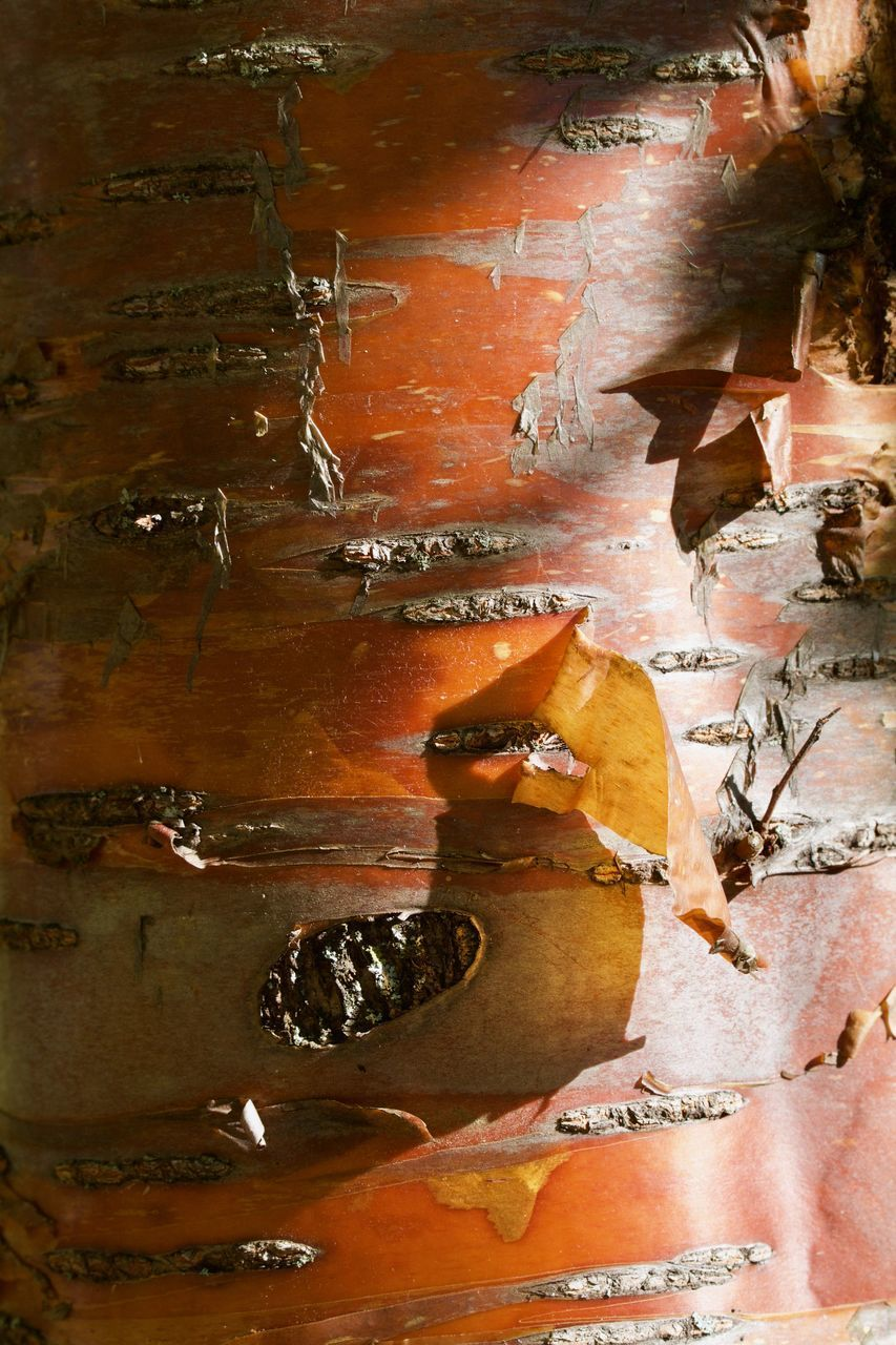 FULL FRAME SHOT OF OLD WEATHERED WALL WITH ORANGE