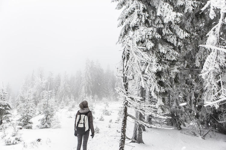 Rear view of hiker looking at frozen trees in forest