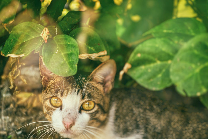 Kitty ~ Black Cat Cat Lovers Cat♡ Habitat Leaves Nature Wild