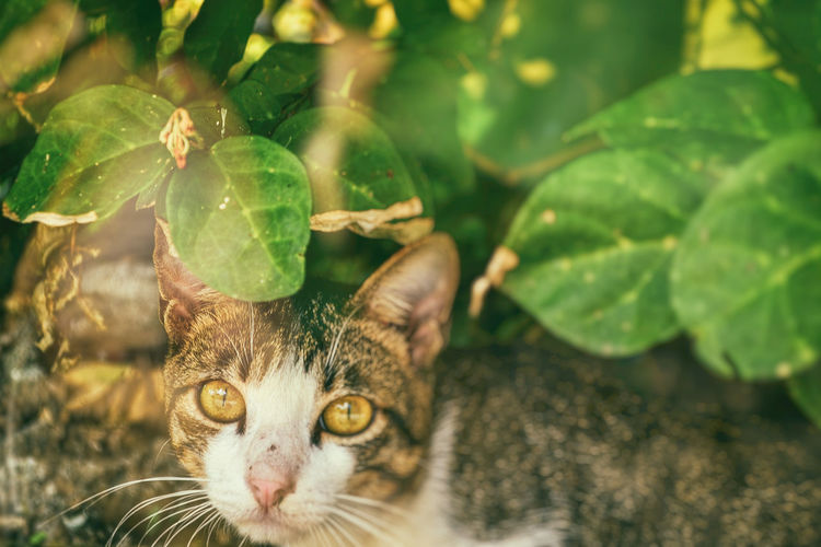 CUTE BROWN CAT HIDING UNDER GREEN LEAVES