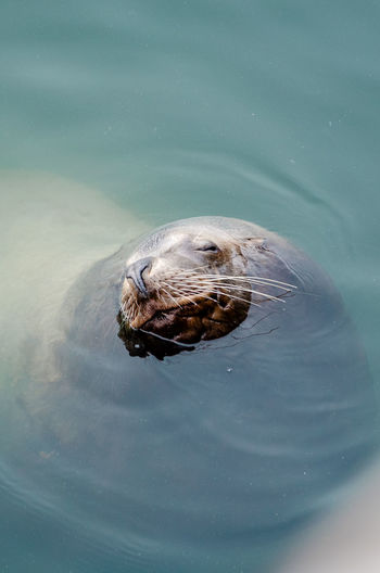 Sea Lion Animal