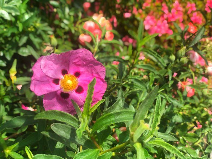 IPhoneX Botany