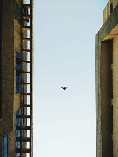 Directly Below Shot Of Buildings Against Bird Flying In Clear Sky