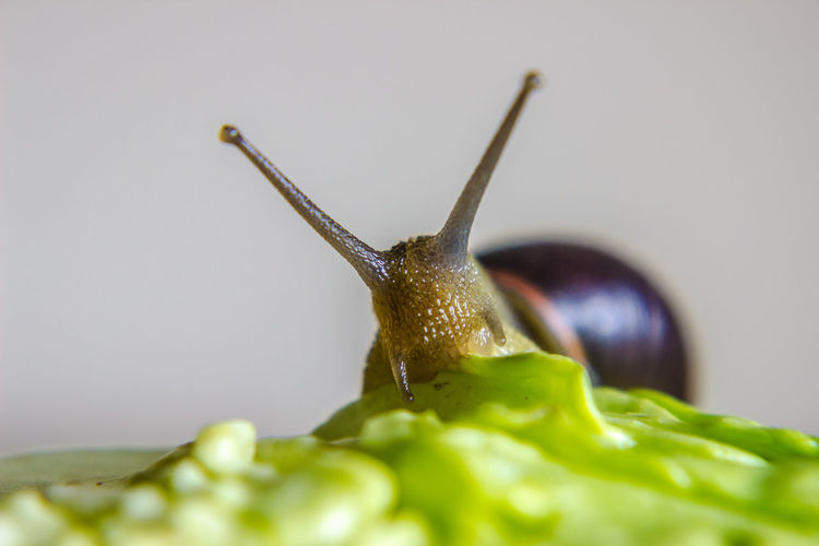 Extreme close-up of snail on leaf