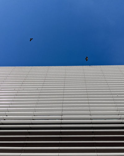 Low angle view of bird flying against building
