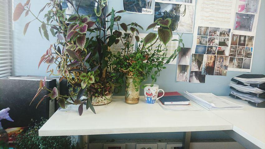Plants Office Officeplants GoodMorning⛅