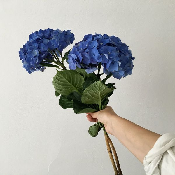 Hydrangea Mothersday Blue Flowers Present For A Friend