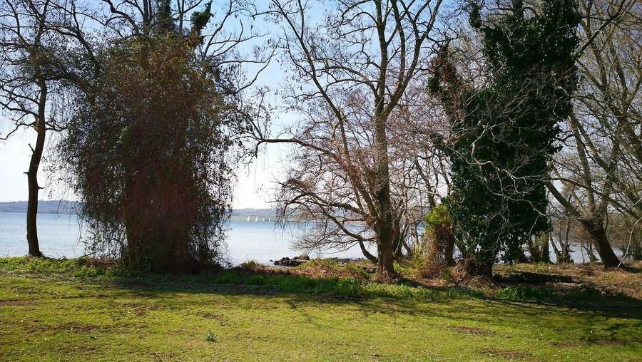 Lago Bolsena da Isola Bisentina Tree Water Sky Grass