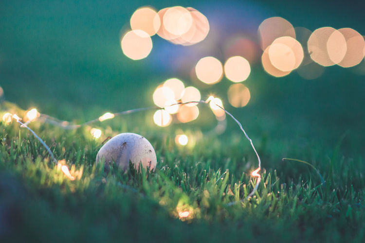 Mushroom Amidst Illuminated String Lights On Grassy Field At Night