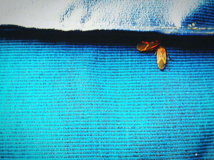 Insect Photography Love Each Anothers Audience.... Needing Companionship The Meaning Of Life Edge Of The World Minimalism Less Is More Love Story Untold Stories Understanding Life Partners In Crime Staying Warm Insect Paparazzi Eyeem Insects Learn & Shoot: Simplicity