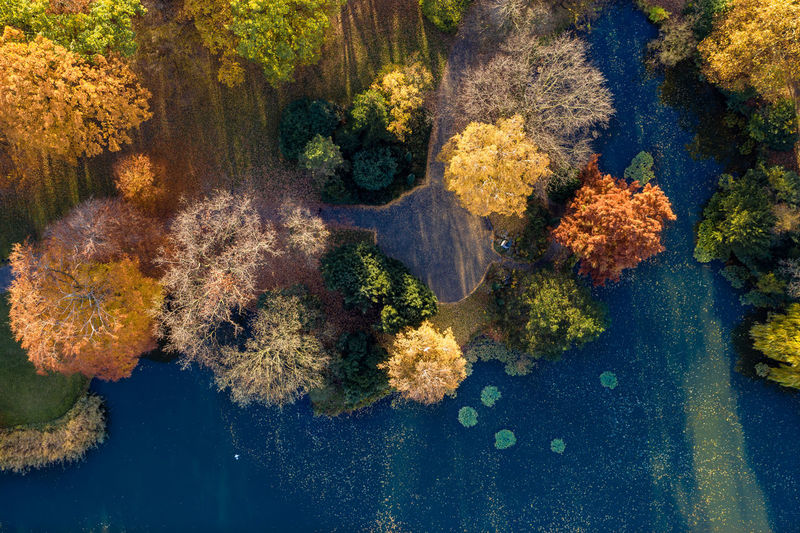 small lake near Neues Rathaus, Hannover Water Nature Plants Outdoor Multi Colored Autumn colors Lake Trees Leafs Nopeople Day