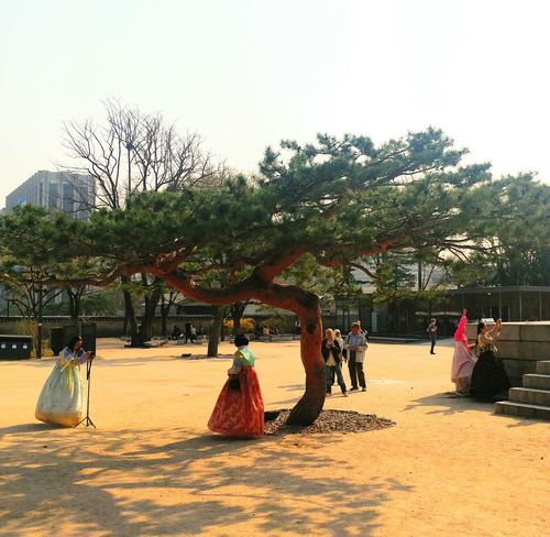 Tree Palm Tree Outdoors Day Nature People Sky Adult Korean Loyalpalace Korean Culture Korean Traditional Architecture Cityscape History