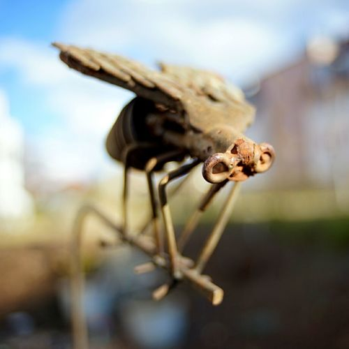 eye to fly Close-up Outdoors Springbreak2017 Hellosunshine Gardenart Garden Photography Background Defocus Blurry Background Wideangle Würzburg Focus On Foreground Rusty Rusty Metal SONY A7ii Froggie Fly