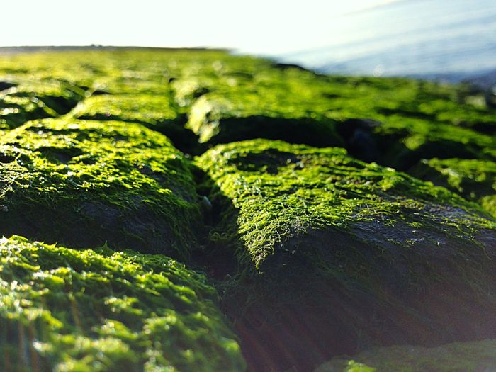 North Sea Moss Sea Weed  Seaweed North Sea Details Details Textures And Shapes Moss Moos Rocks Rocks And Water Rocks On The Shore Rocks And Moss Growth Sky Freshness Close-up Sunlight Beauty In Nature Day Outdoors No People Nature Green Color