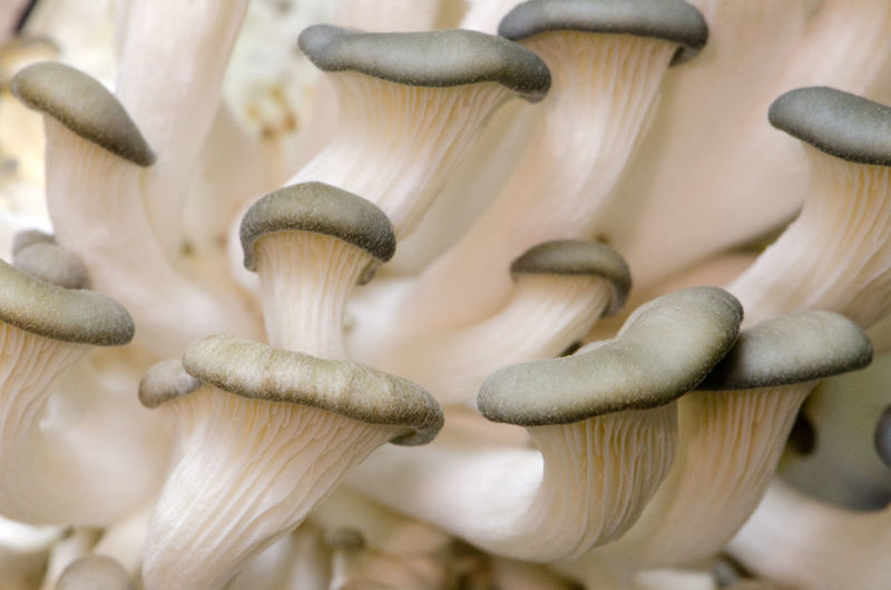 Close-up of mushrooms growing outdoors