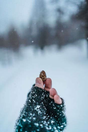 Cropped hand of person holding pine cone during snowfall