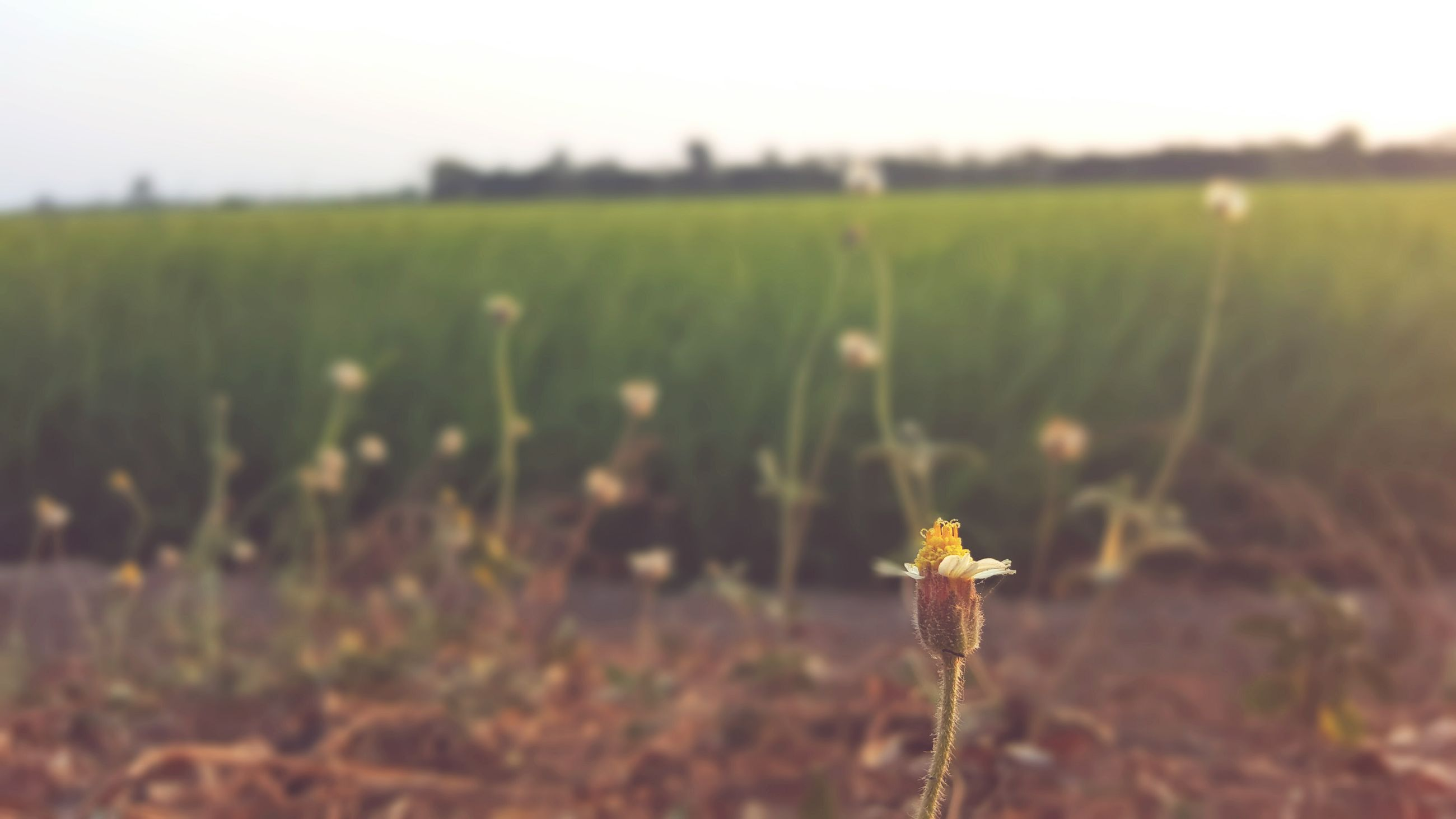 animal themes, focus on foreground, animals in the wild, field, wildlife, one animal, grass, selective focus, insect, nature, landscape, close-up, beauty in nature, plant, growth, tranquility, outdoors, day, tranquil scene, no people