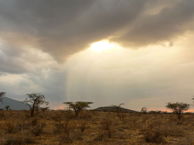 Shaba National Reserve in Northern Kenya Kenya National Park The Week On EyeEm Africa Beauty In Nature Cloud - Sky Day Landscape Nature No People Outdoors Safari Scenics Sky Storm Cloud Tranquil Scene Tranquility Travel Destinations Tree