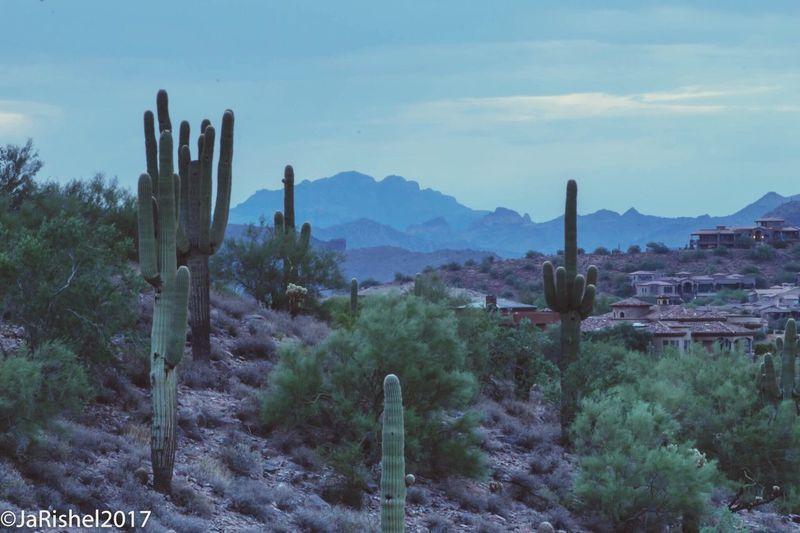 Cactus plants on desert against sky