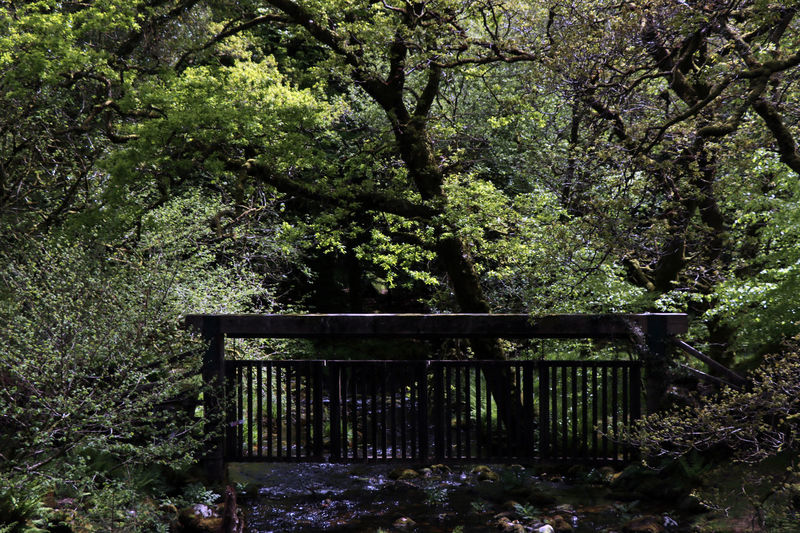 Burrator Series 3XPSUnity Burrator Countryside Dartmoor Day Devon Devon UK Foliage Forest Growth Ladyphotographerofthemonth Landscape Moorland Nature No People Outdoors Railing River River Scene Rural Tranquility Tree