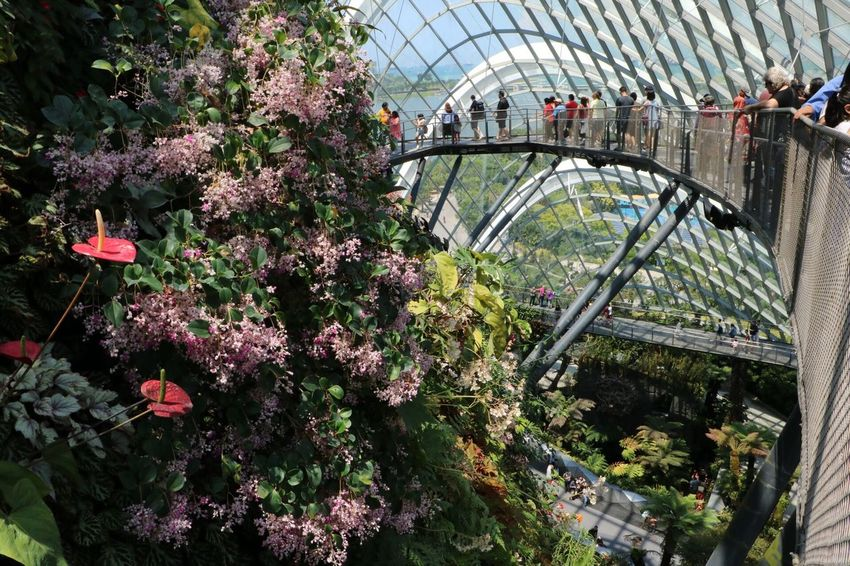Flower Built Structure The Great Outdoors 2017 Eyeem Awards Growth Architecture Outdoors Nature Building Exterior The Photojournalist - 2017 EyeEm Awards Break The Mold Gardens By The Bay 3XSPUnity The Purist (no Edit, No Filter) EyeEmNewHere Singapore Plant Nature Growth Travel Miniature Travel Destinations Cloud Forest Dome Treetopwalk Real People Cloud Forest Tree top walk Neighborhood Map
