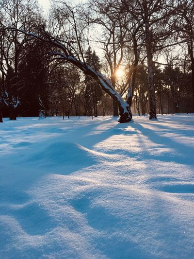 Capture Tomorrow Snow Cold Temperature Winter Tree Nature Plant Frozen Beauty In Nature Sunlight White Color Environment Outdoors Tranquility Day No People Shadow