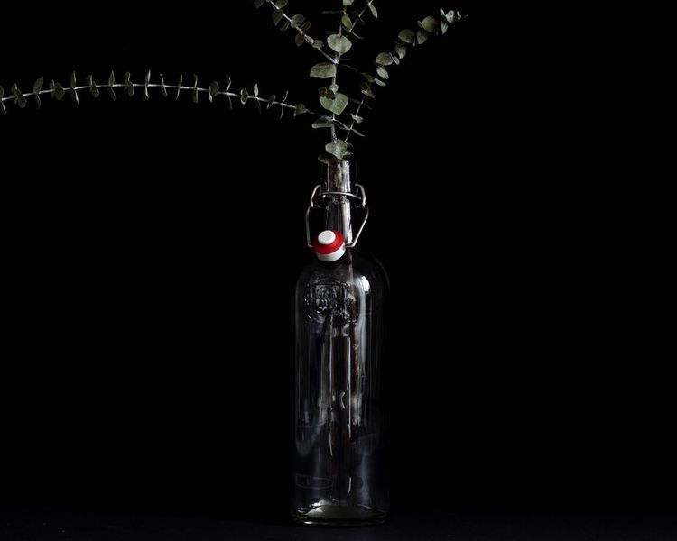 Eucalyptus Glass Bottle Plants 🌱 Decoration Eucalyptus Plants Plant Studio Shot Black Background No People