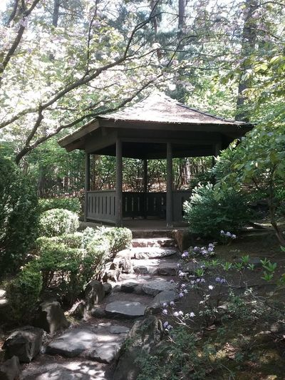 A small hut in the morning sun, Tree Plant Architecture Built Structure Nature No People Growth Forest Day Outdoors Building Exterior Building Tranquility Park Land Beauty In Nature Roof Shrine Japanese Culture Japanese Garden Japanese Style Hut Wooded Path