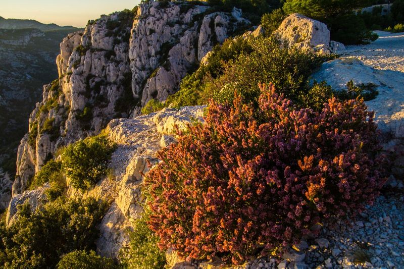 marseille,calanque,bouche du rhone, france Rock Nature Plant Rock - Object Mountain Beauty In Nature Tree Solid Cliff Sea No People Scenics - Nature Rock Formation Water Day Land Tranquil Scene Outdoors Tranquility Travel Formation Mountain Peak