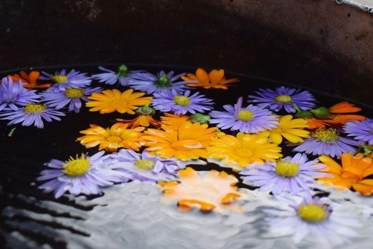 Aiaiai😍😍 Flower Fragility Petal Freshness Nature Flower Head No People Beauty In Nature Day Yellow Water Plant Multi Colored Frumusețe мир вокруг тебя красота💕🌸🌹 Мир прекрасен толькоулыбайся Freshness Beauty In Nature FrumusețeaSimplității толькоучусь Purple Plant
