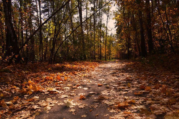 Autumn leaves. Nikon Nature Colors Russia Morning утро пейзаж краски  Landscape Golden Autumn Золотая осень Fallen Leaves Autumn colors Tree Forest Autumn Branch Sunlight