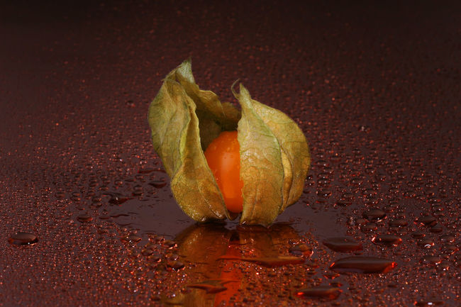 little physalis Drop Dropping Drops Drops Of Water Flower Food Food And Drink Food Photography Fragility Fresh Fruit Fresh Fruits Freshness Fruity Leaf Nature Orange Color Physalis Physalis Fruit Physalis Peruviana Still Life Still Life Photography Studio Shot Water Water Drops Wet