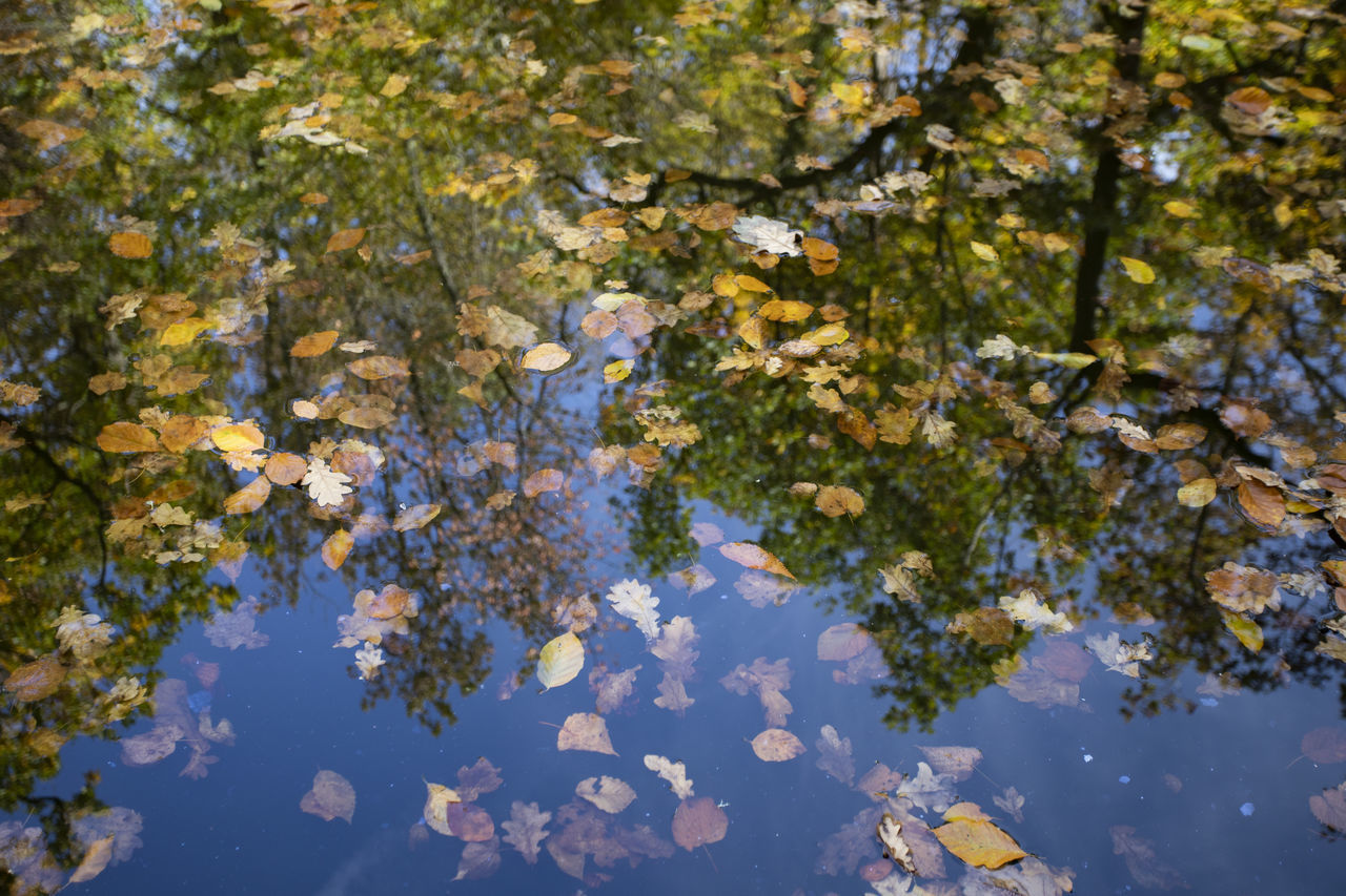 plant, leaf, plant part, tree, beauty in nature, reflection, nature, day, water, no people, lake, growth, waterfront, branch, autumn, floating, outdoors, tranquility, change, floating on water, leaves