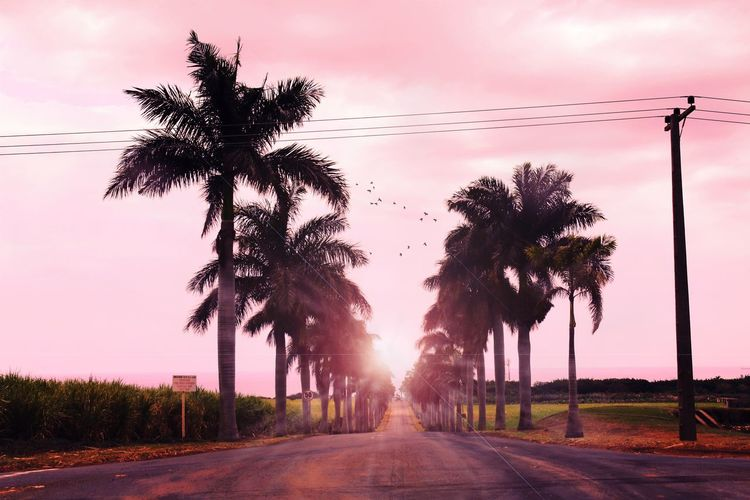 Pink Palmy Pathway Road. ローズ🌸⛰️ Canon Nature Color Art Colors Amazing Travel Road Pink Sunset Art Palm Trees Palm Tree Day
