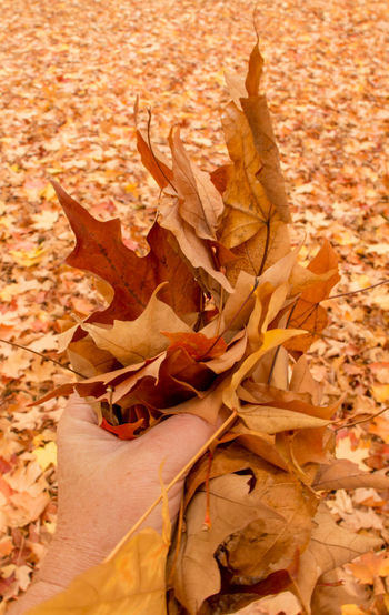 High angle view of dry maple leaves on field