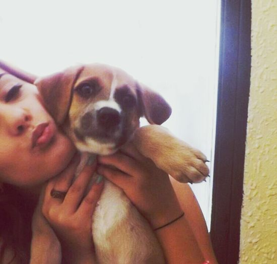 Puppy Little Dog Beautiful Kiss