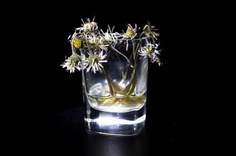 Close-up of flower vase against black background