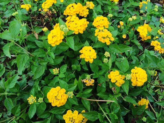 Flores amarillas 😊