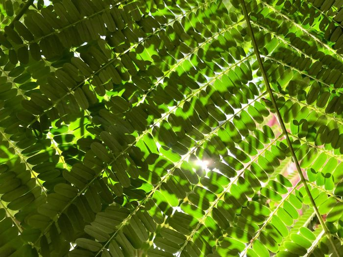 Leaves Green Color Fragility No People Nature Vulnerability  Close-up Day Beauty In Nature Plant Leaf Growth Plant Part Full Frame Natural Pattern Focus On Foreground Outdoors Pattern Sunlight