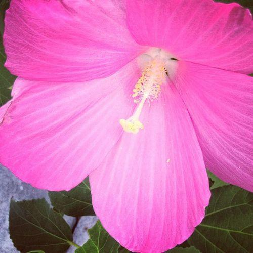 Flower Beach Beachstagram Fireisland iphoneonly instagood