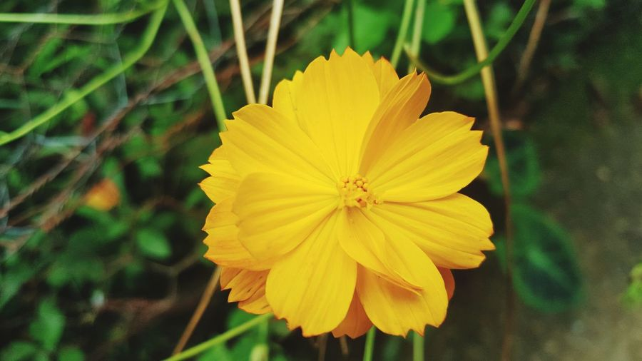 Flower Yellow Petal Flower Head Beauty In Nature Nature Plant Day