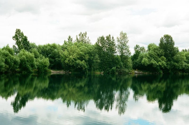 Trees by lake against sky